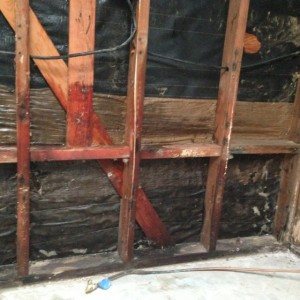 Mold in house framing